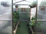 Steeltech Greenhouse